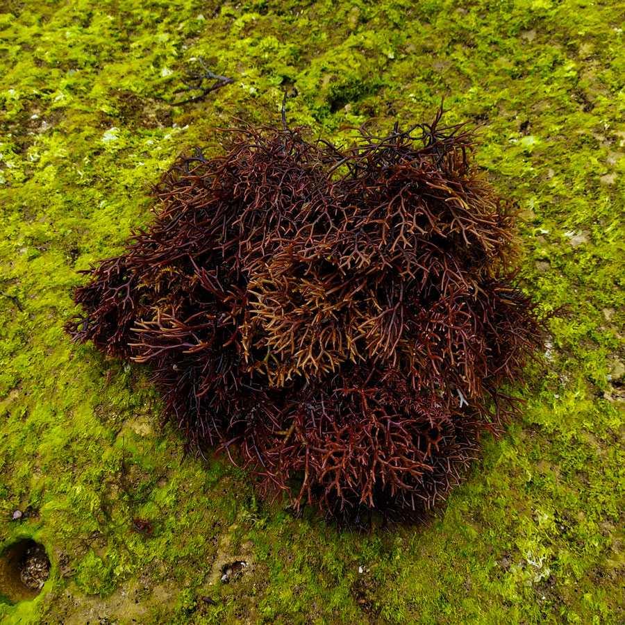 7 Surprising Health Benefits of Eating Seaweed